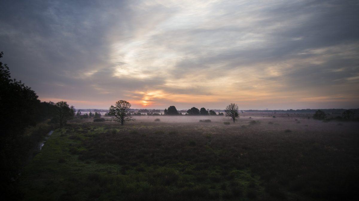 Natuurfotografie Drenthe - Fochteloërveen
